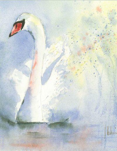 Coniston Swan